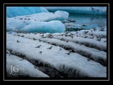 iceland by Jack Graham