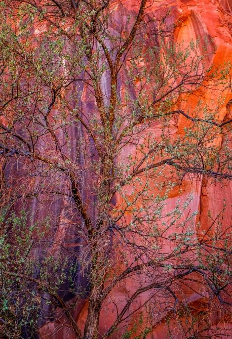 Canyon de Chelley, AZ; X-T1 by jack graham