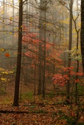 Fall forest; Great Smokey Mtns NP, Tennessee; X-T1 18-135 by bill fortney