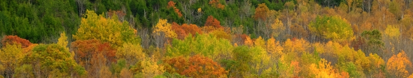 Maine forest; Acadia NP, Maine; by bill fortney