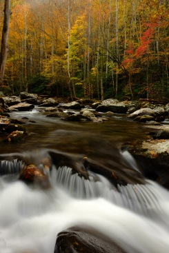 Smokies stream, Tennessee; X-T1 by bill fortney