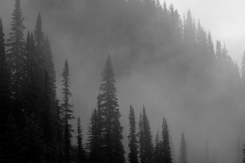 Trees in Mist; Glacier NP; X-E1 by bill fortney