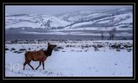 Wyoming; X-T1 Nikon 300 by jack graham