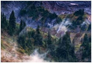 mist in the trees, mt rainier, jack graham